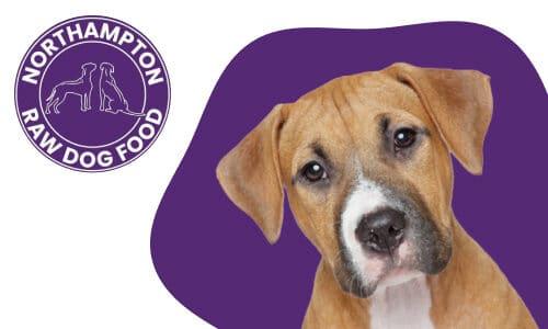 Northampton Raw Dog Food Fallback Image